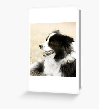 Soccer Dog - border collie Greeting Card