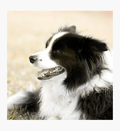 Soccer Dog - border collie Photographic Print