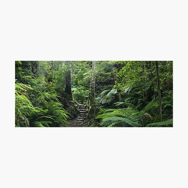 The Fernery, Grand Canyon. Photographic Print
