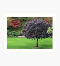 The Garden Art Print