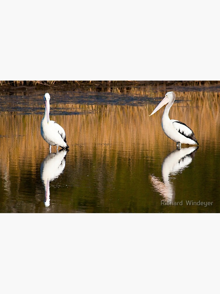 Two Pelicans by RICHARDW