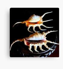 Shell We Dance, Da Da Da... Canvas Print