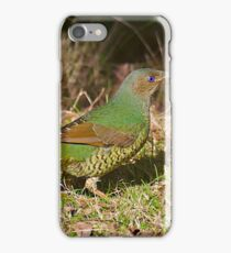 Female Satin Bower Bird iPhone Case/Skin