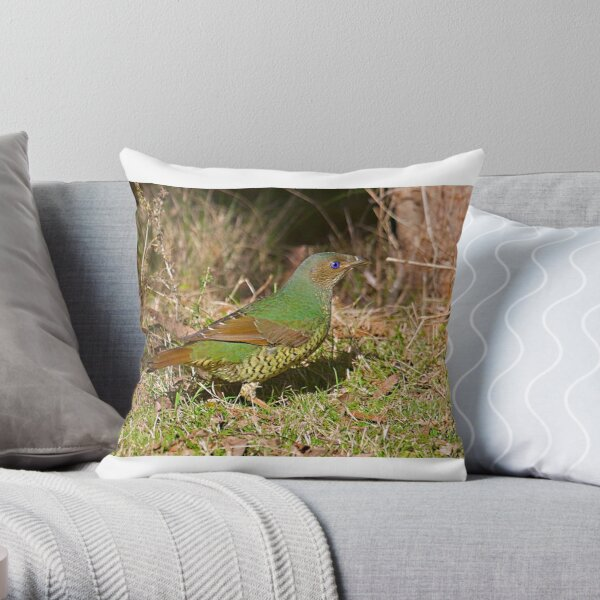 Female Satin Bower Bird Throw Pillow
