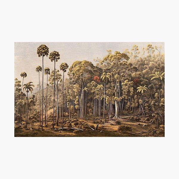 Australian Landscapes - Cabbage Tree Forest Fotodruck