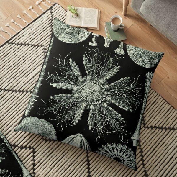 Haeckel Echinidea 60 Drawing Floor Pillow
