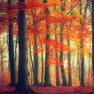 Dreamy Fall Reds by Dirk Wuestenhagen