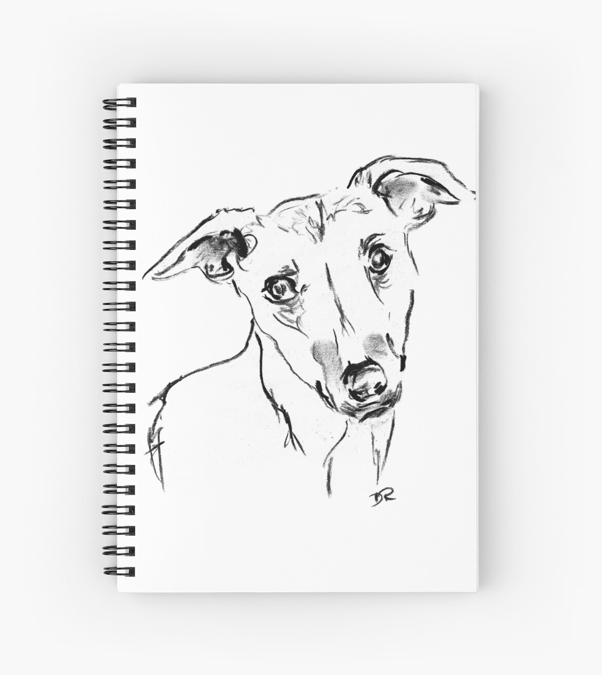 Whippet Drawing by Douglas Rickard