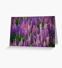Lupins Lupins Lupins Greeting Card