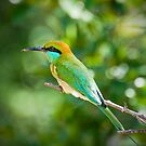 Green Bee-eater by Dilshara Hill