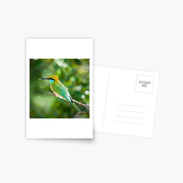 Green Bee-eater Postcard
