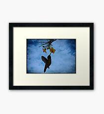 Humming Bird. Framed Print