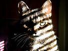 Tiger Camo by jodi payne