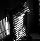 Black & White Stripes by jodi payne