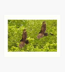 Turkey Vultures Art Print