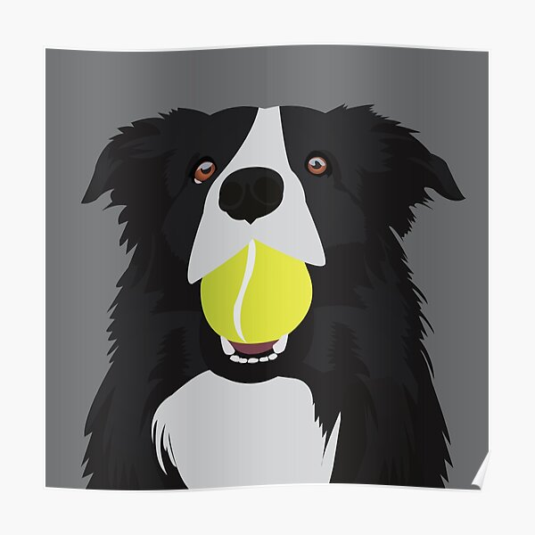 Border Collie with a Tennis Ball Poster
