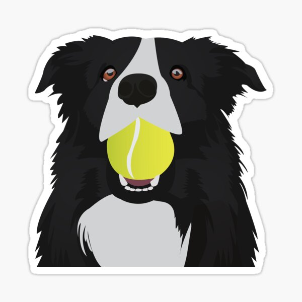 Border Collie with a Tennis Ball Sticker