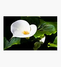One Cala Lily Photographic Print