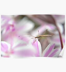 Insect on the phlox Poster