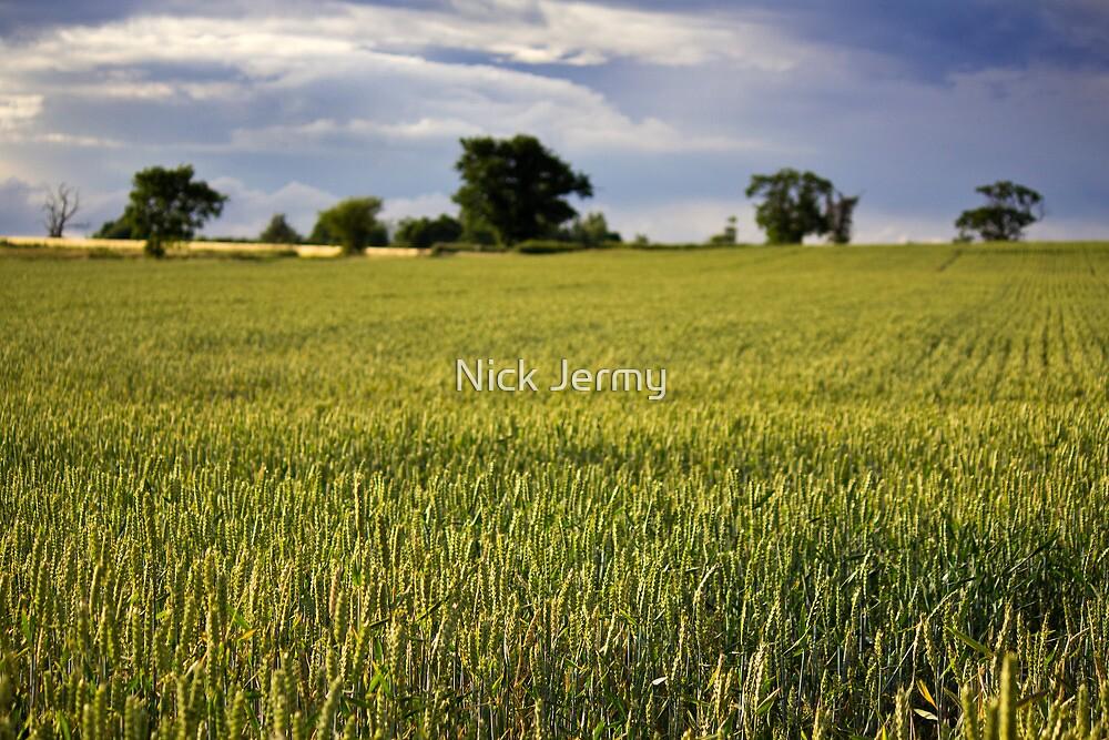 Wheat Fields by Nick Jermy