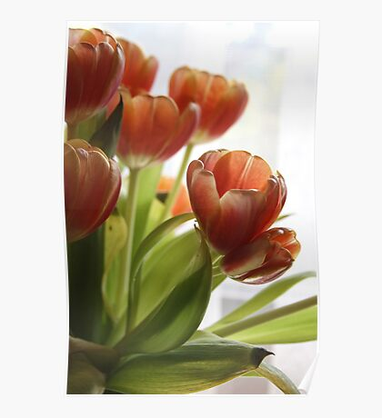 My Tulips Poster