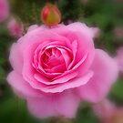 Rose's Dream by Eugenio