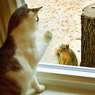 Max vs. Squirrel by Stephen D. Miller