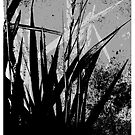 down in the grass . . .  by evon ski