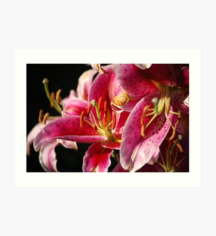 Flower Close-up Art Print
