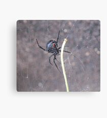 Busy Black Widow Canvas Print
