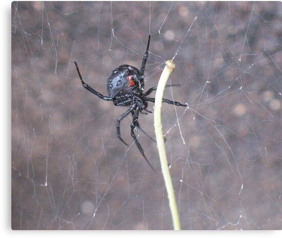 Busy Black Widow by Diana Landry