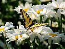 Yellow Butterfly  by Marcia Rubin