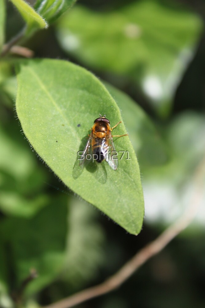 A close up of a fly resting on a leaf by Sophii271