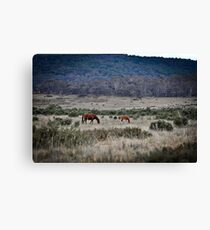 Brumby Love Canvas Print
