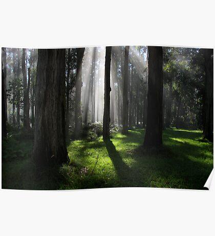 Verdant forest Poster