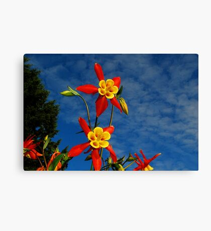 Blue Skies & Columbine Canvas Print