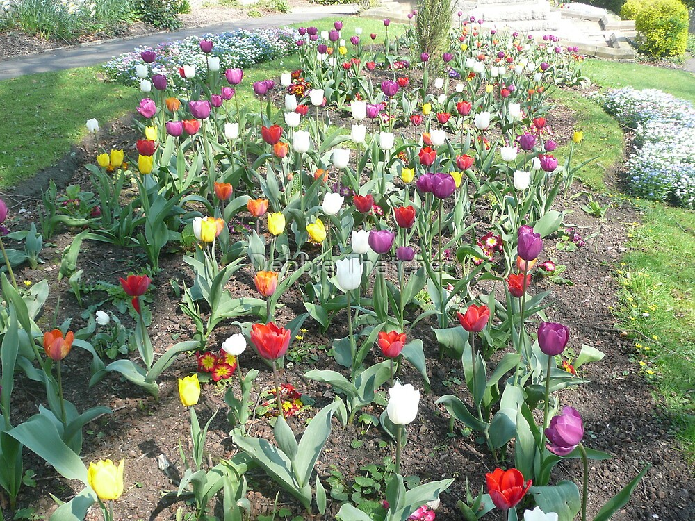 Bed of Tulips by Debbie Thatcher