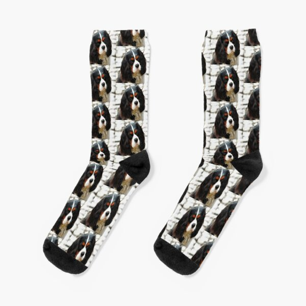 Portrait Of A King Charles Cavalier Spaniel Socks