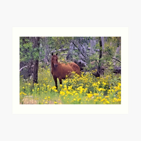 RSPCA Cooma Wild Brumby Fundraiser Art Print