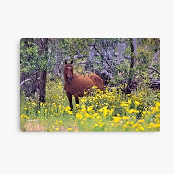 RSPCA Cooma Wild Brumby Fundraiser Canvas Print