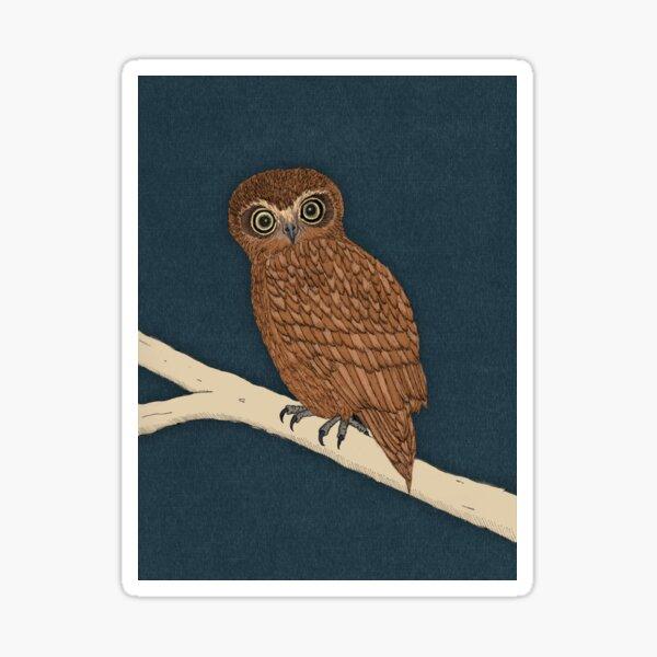 Boobook Owl Sticker