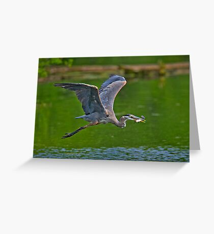 Off with a Prize Greeting Card