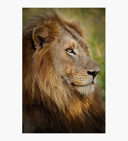 Resting King Photographic Print