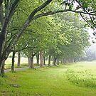 oak allee by mikepaulhamus