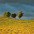 Paddock, Jamieson Valley by - Zig -