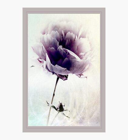 Lavendar Blue Photographic Print