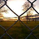 sunrise on the fence by calebhill