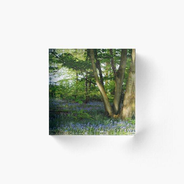 The Magic Faraway Tree Acrylic Block