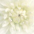 Light by Margi