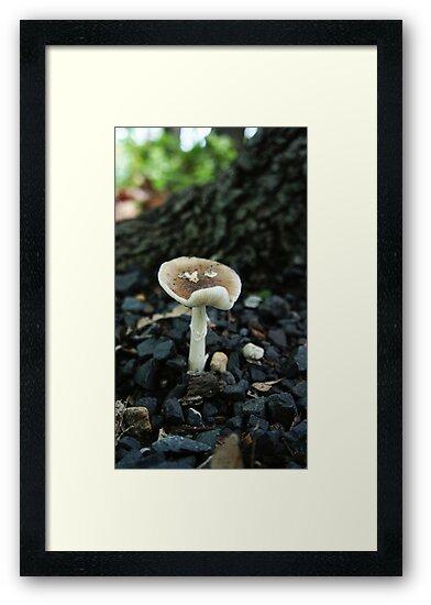 Sad Mushroom by Jessica Liatys